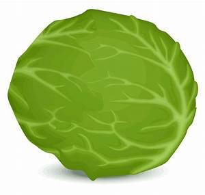 Lettuce Leaf Vector | www.imgkid.com - The Image Kid Has It!