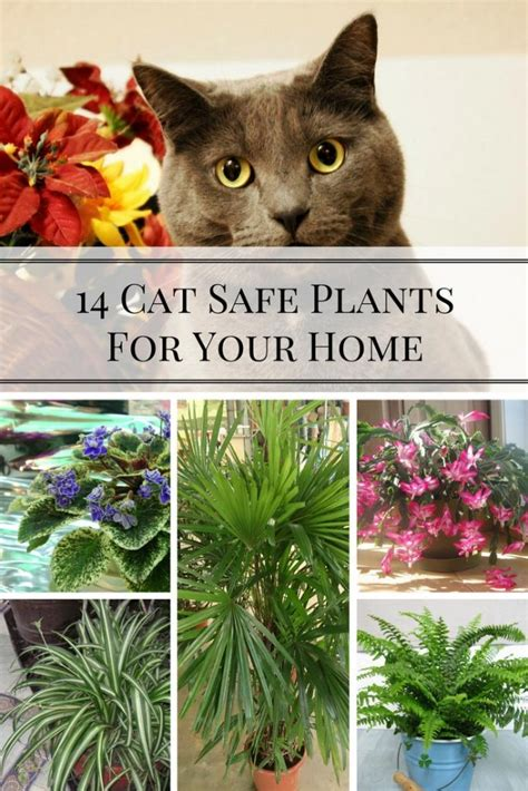 14 cat safe plants for your home home and gardening ideas