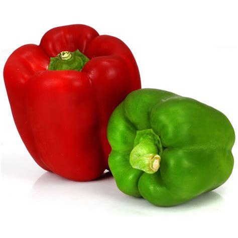 cuisiner le poivron vert poivrons vert le sachet de 250 g vos courses en