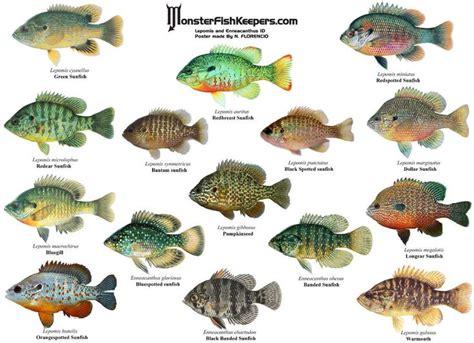 images  freshwater aquaria  pinterest