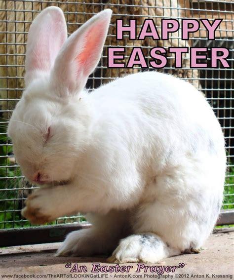 Cute Easter Meme - happy easter new beginnings what is easter article photos by anton k