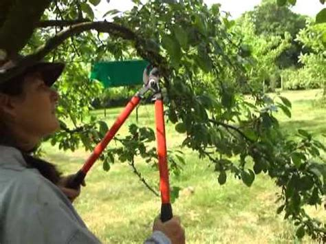 Plum Tree Pruning Youtube