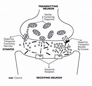 Effects of Drugs of Abuse on the Brain | NIDA for Teens