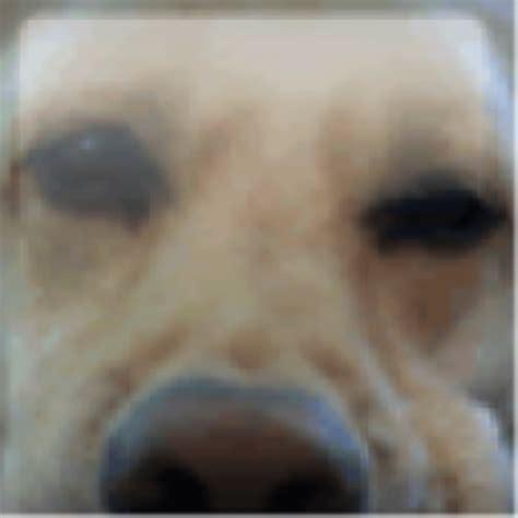 Xbox 360 Dog Pfp