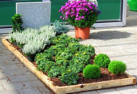 Pflanzen Für Die Sonne by Pflanzzensset Einzelgrab Sonne Pflanzen Versand Harro S