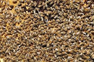 Mittel Gegen Bienen : bienen in der stadt revierimker oberhausen ~ Frokenaadalensverden.com Haus und Dekorationen
