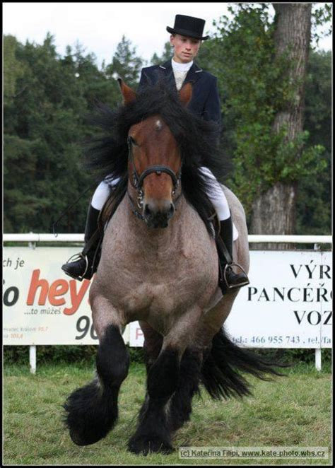 ardennes bay roan horse