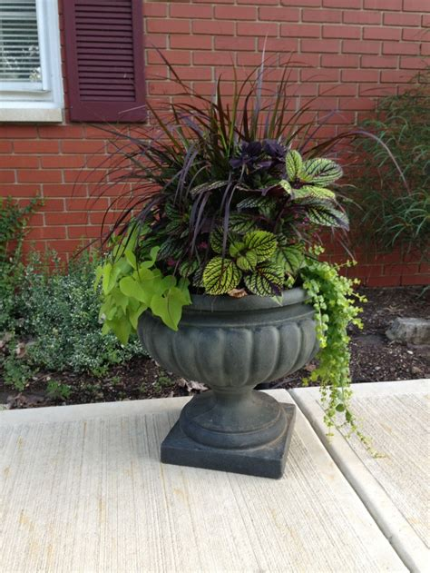 purple grass container ideas 1000 images about purple fountain grass on pinterest the morning sun and planters