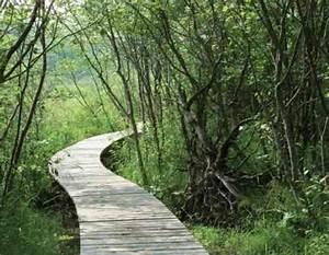 Allee De Jardin Facile : all e de jardin en bois esth tique et facile faire promenade en sous bois jardins en bois ~ Melissatoandfro.com Idées de Décoration
