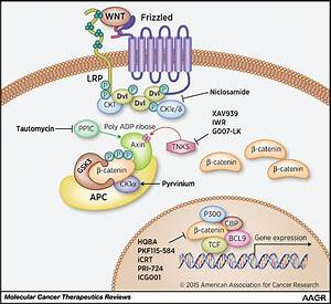 Targeting Wnts At The Source U2014new Mechanisms  New Biomarkers  New Drugs