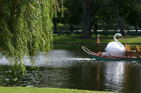 Swan Boats Sunday Hours by 19 Best My Pictures Images On Maine Mount