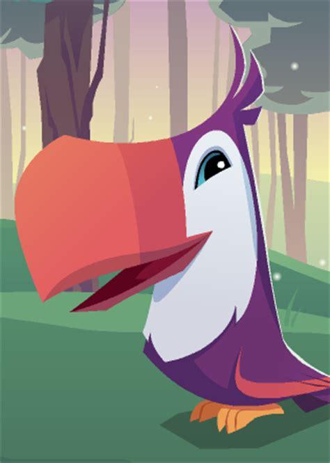 toucan animal jam wiki fandom powered  wikia
