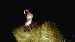 Dodo Bird Sighting Youtube