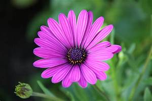 Schöne Bilder Kaufen : sch ne bl te foto bild pflanzen pilze flechten natur bilder auf fotocommunity ~ Orissabook.com Haus und Dekorationen