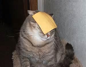 cheese cat before nine 12 27 09 1 3 10