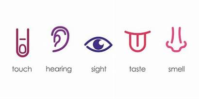 Senses Five Sensory Marketing Multi Future Tools