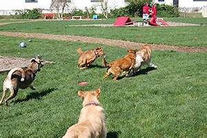 red dog pet resort and spa pet boarding daycare magazine With red dog daycare