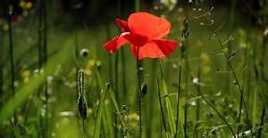 Que Planter En Juin : jardiner en f vrier que planter semer et faire au jardin ~ Melissatoandfro.com Idées de Décoration