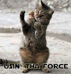 wars cats cats in wars wars catsstar wars cats