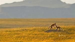 fox rocky mountain cascade montana 2016 desktop