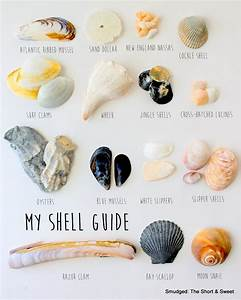 Smudged My Mid Atlantic Shell Guide
