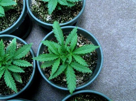 7 Things I Wish I Knew When I Started Growing Weed