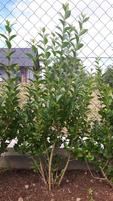 bäume schneiden im sommer baum fllen schnitt simple mit den kosten fr das grundstck