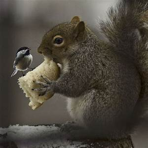 20, Squirrel, Photos, That, Show, An, Extremely, Cute, Side, Of, These, Teeny, Tiny, Rodents
