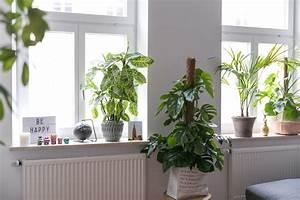 Fensterbank Außen Dekorieren : fensterbank deko ein kleiner dschungel in unserer wohnung josie loves ~ Eleganceandgraceweddings.com Haus und Dekorationen