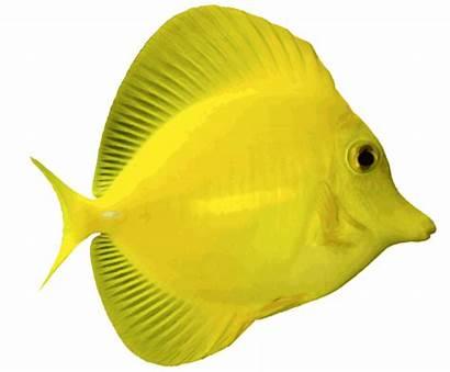 Fish Water Salt Clipart Angelfish Clip Saltwater