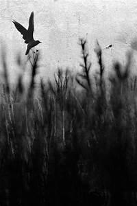 vintage, black and white, nature, bird, animal - image ...