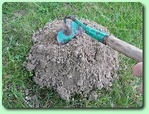 Comment Se Debarasser Des Taupes : comment se d barrasser des taupes dans le jardin design de maison ~ Melissatoandfro.com Idées de Décoration