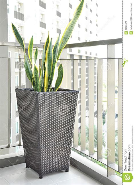 plante verte dans le pot de fleur en osier sur le porche photographie stock libre de droits