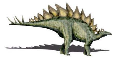 stegosaurus dinosaurio herbivoro  placas rombales