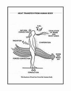Human Body Heat Transfer