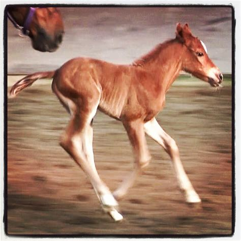 young horse foal training straightness