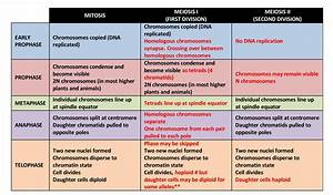 3 5  Comparison Of Mitosis And Meiosis