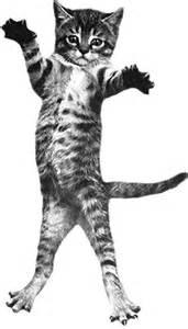 cat bounce cat bounce