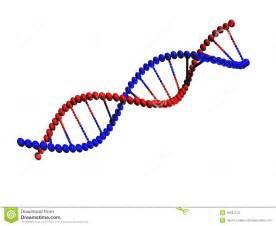 DNA Strand Clip Art
