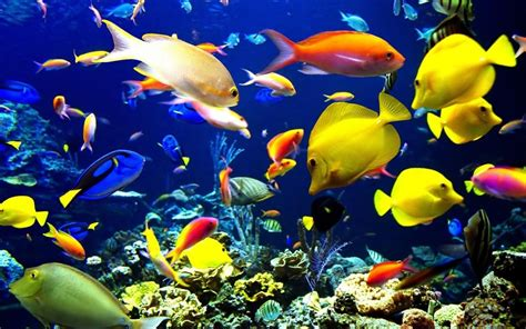 Animated Fish Aquarium Wallpaper Mobile - 20 aquarium hd wallpapers pictures and freshwater aquarium