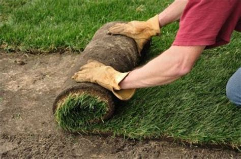 best time of year to lay sod when to plant grass seeds in vancouver deerwood landscaping deerwood landscaping