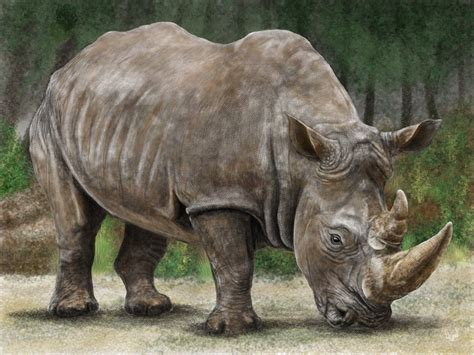 rhinoceros pictures kids search