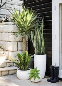 best 25 front door plants ideas on front door planters front porch planters and