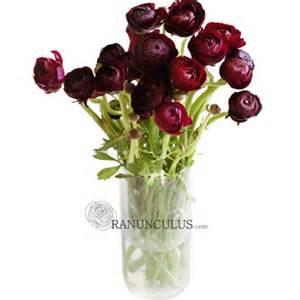 Burgundy Ranunculus Flowers