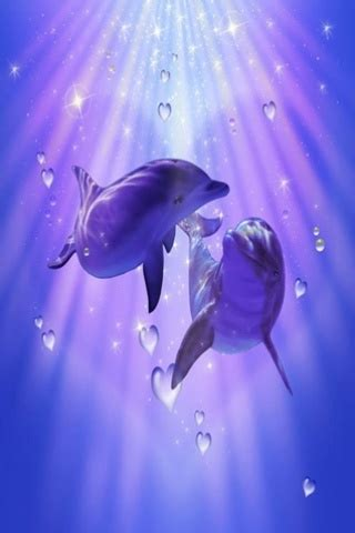 delphin bilder