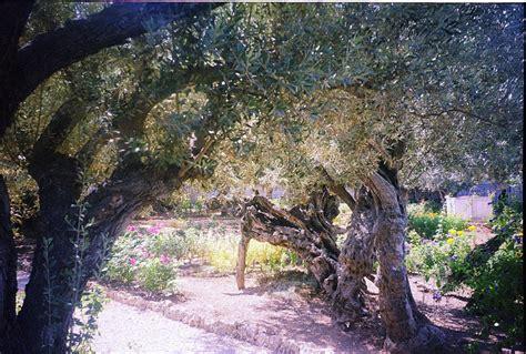 olive garden mentor ohio olive garden hours today veterans day free meals 2017