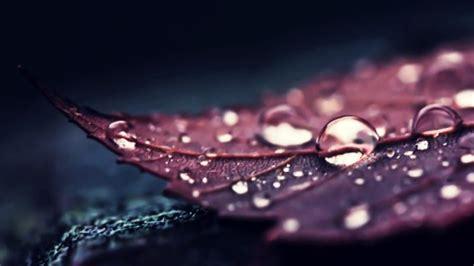 nature leaves water macro water drops hd wallpapers