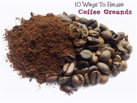 Every cup helps a pup! 10 Ways to Reuse Coffee Grounds - Turning the Clock Back