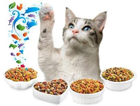 Homemade Cat Food Versus Commercial Cat Food