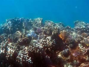 Under The Sea Deep Fish Free Photo On Pixabay